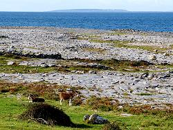 Burren coast and Aran Islands